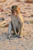 Little monkey sitting on the ground inzoo — Stock Photo