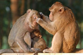 Monkey family. Mother father and baby — Stock Photo