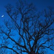 Dead trees at night with a half-moon — Stock Photo