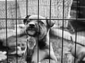 Pup in a pen — Stock Photo