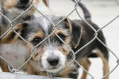 Puppy in a pen — Stock Photo