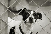 Dog in a pen — Stock Photo