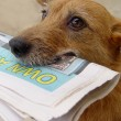 Dog with the daily news — Stock Photo