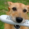 Dog with a remote control — Stock Photo