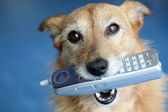 Dog with a telephone — Stock Photo