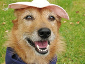 Dog in a hat with a happy smile — Stock Photo
