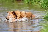 Dog splashing in the lake — Stock Photo