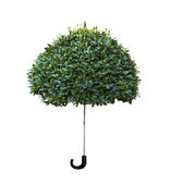 Wood umbrella — Stock Photo