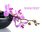 Orchid in a black bowl on a white background — Stock Photo