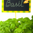 Fresh green basil and a nameplate - Stock Photo
