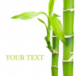 Bamboo with leaves on a white background — Stock Photo