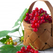 Royalty-Free Stock Photo: Fresh red currant in the basket