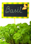 Fresh green basil and a nameplate — Stock Photo