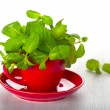 Mint in a red cup on the table — Stock Photo
