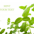 Stock Photo: Mint on white background