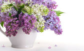 Lilacs in a white jug — Stockfoto