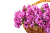 Crisantemo rosado en una cesta — Foto de Stock