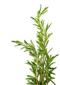 Branches of rosemary on a white background — Stock Photo