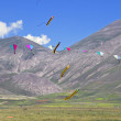 Kites in flight — Foto Stock