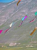 Kites in flight — Stock Photo