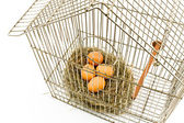 Eggs in Nest confined in Bird Cage — Stock Photo