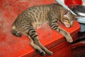 Cat sleeping — Stock Photo