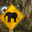 Attention éléphant ! - Stock Photo