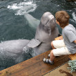 Foto Stock: Dolphin belugkisses boy