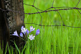 Flowers By Fencepost — Stock Photo