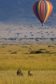Hot air game drive — Stock Photo