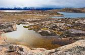 Tundra arktyczna — Zdjęcie stockowe