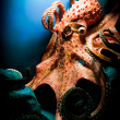 Scary Giant Octopus - Stock Photo