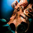 Foto Stock: Scary Giant Octopus