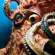 Head of an Octopus — Stock Photo