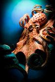 страшно гигантский осьминог — Стоковое фото