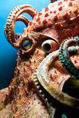 Head of an Octopus — Stock Photo