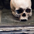 Foto Stock: Skull on old Book