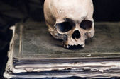 Skull on an old Book — Stock fotografie