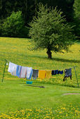 Clothesline in a Spring Field — Stock Photo