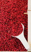 Basket full with Cowberries — Stock Photo