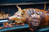 Sucking Pig — Stock Photo
