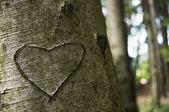 刻在一棵树上的爱 — 图库照片