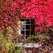 Window with autumn Foliage — Stock Photo
