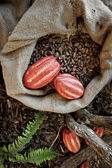 какао-бобы и какао фрукты — Стоковое фото