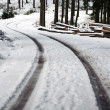 Winding Road in a Winter Forest — Stock Photo