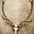 Royalty-Free Stock Photo: Deer\'s Skull on a Wall