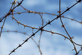 Barbed wire on blue sky background — Stock Photo