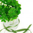 Photo: Closeup of bouquet of false shamrock with green ribbon