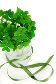 Closeup of bouquet of false shamrock with green ribbon — Stock Photo