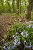 Sendero en el bosque — Foto de Stock